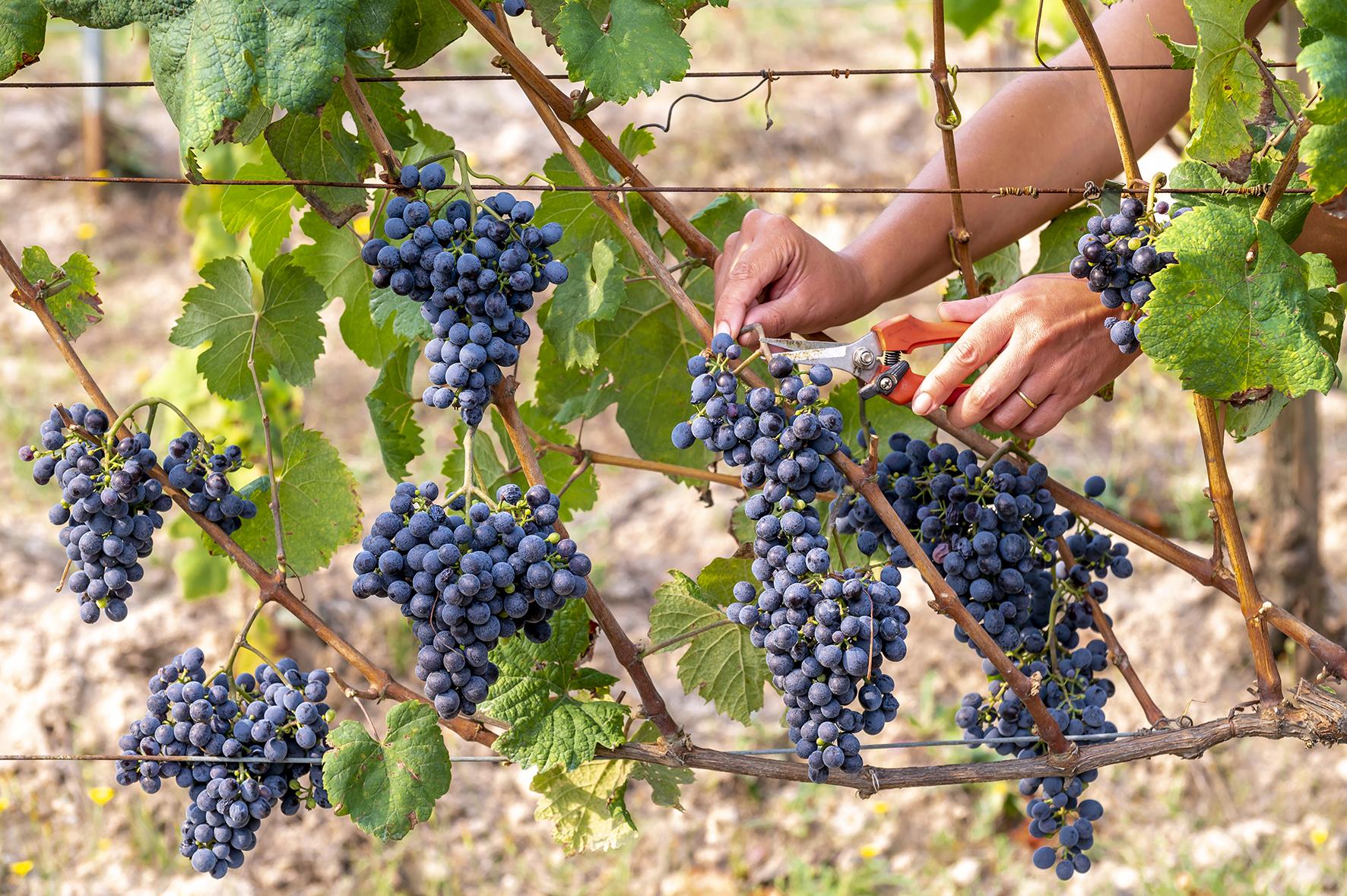vinos ribeiro